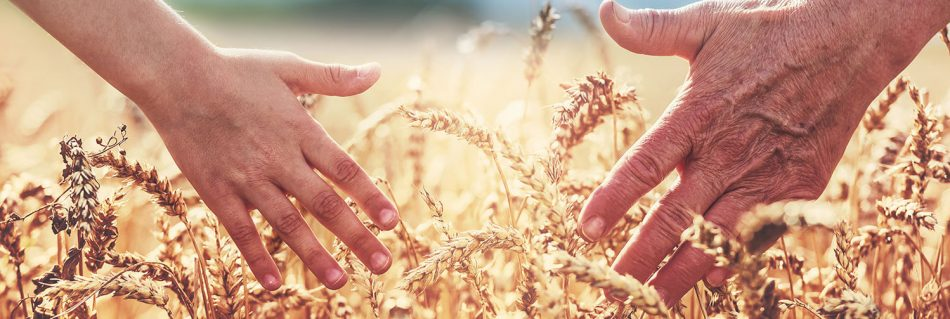 A quick guide to succession planning for your farming estate image